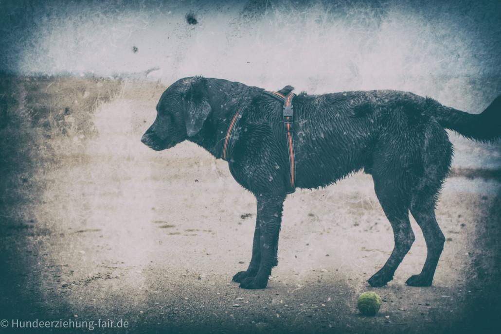 wpid52-Labrador-am-Meer.jpg
